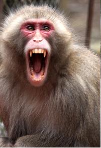 「サル 威嚇」の画像検索結果